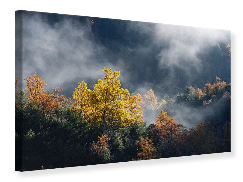 Leinwandbild Mondscheinwald
