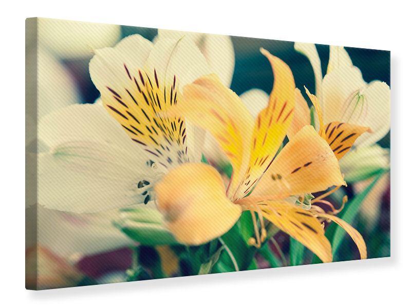 Leinwandbild Tigerlilien