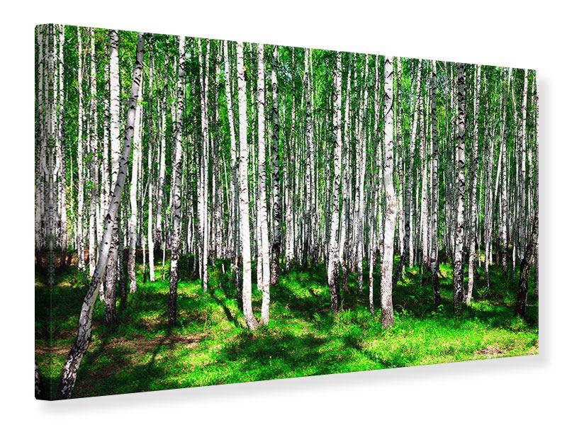 Leinwandbild Sommerlicher Birkenwald