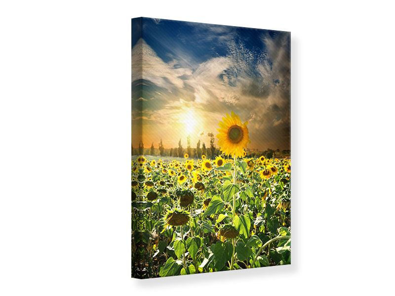Leinwandbild Sonnenblumen im Sonnenuntergang