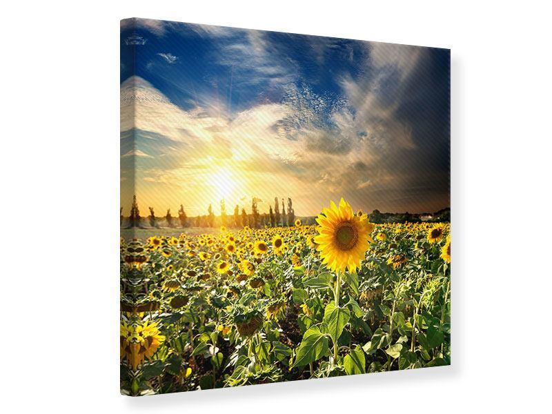 Leinwandbild Sunny Flowers