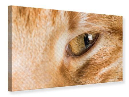 Leinwandbild Close Up Katze
