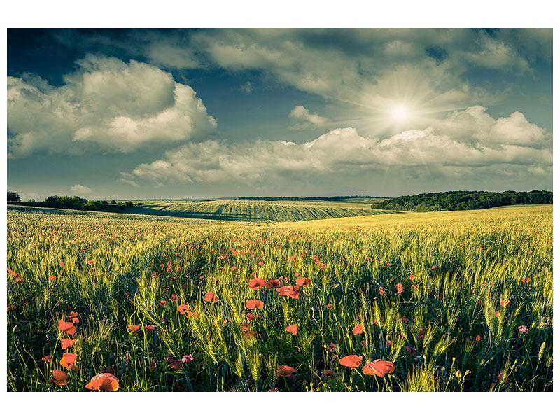 Leinwandbild Der Mohn im Weizenfeld