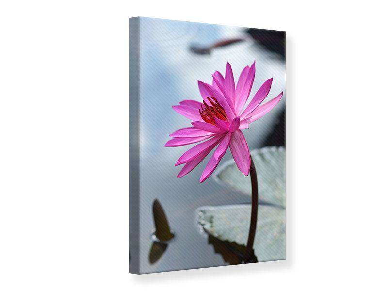 Leinwandbild Grosse Lotus in Pink