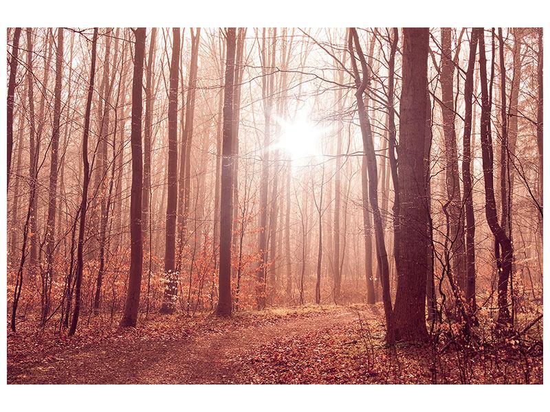 Leinwandbild Sonnenuntergang im Herbstwald