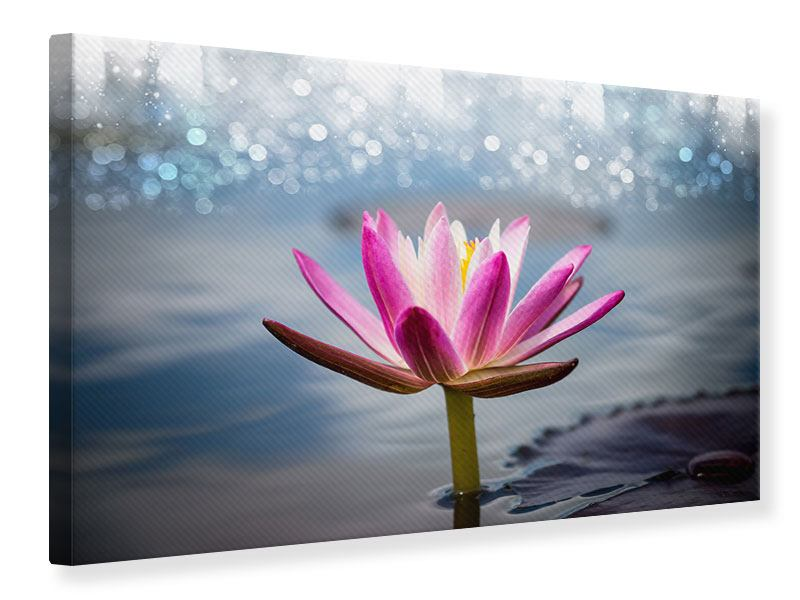 Leinwandbild Lotus im Morgentau