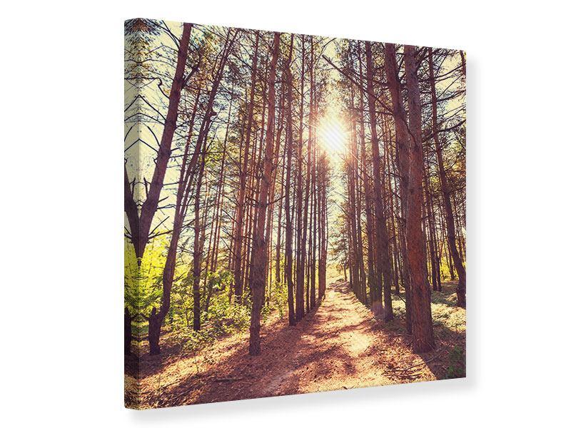 Leinwandbild Licht am Ende des Waldweges