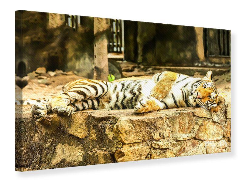 Leinwandbild Der Sibirische Tiger