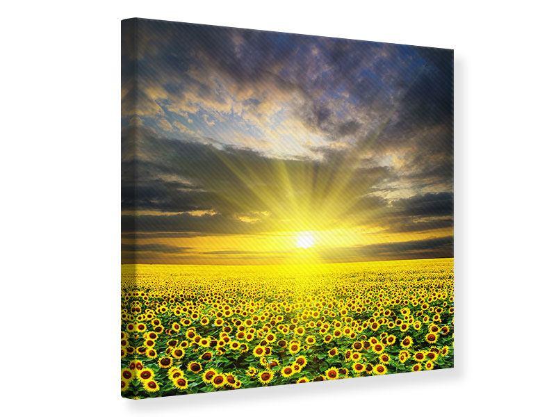 Leinwandbild Abenddämmerung bei den Sonnenblumen