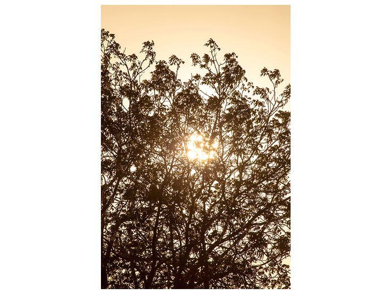 Leinwandbild Das Licht im Baum