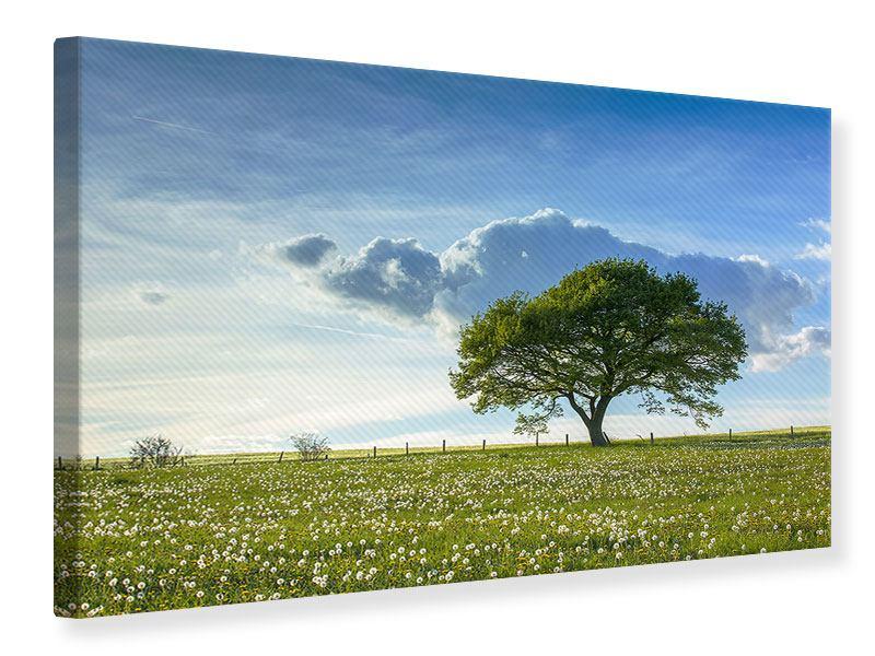 Leinwandbild Frühlingsbaum