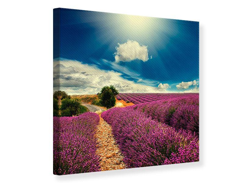 Leinwandbild Das Lavendeltal