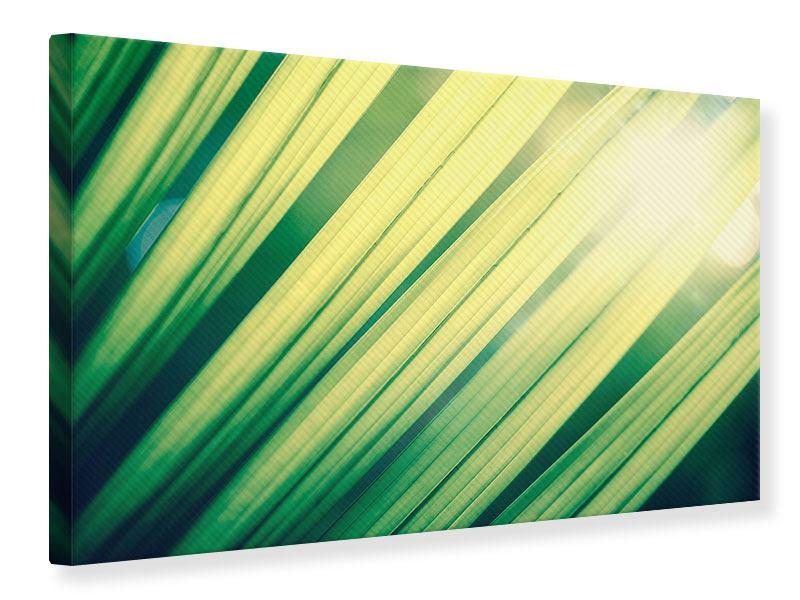 Leinwandbild Beleuchtetes Palmblatt