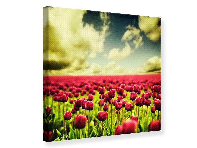 Leinwandbild Ein Tulpenfeld