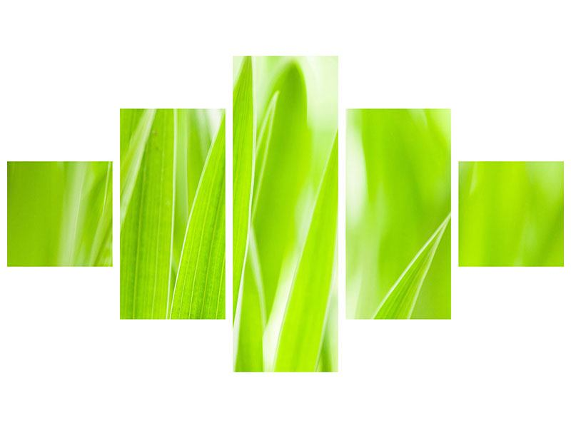 Leinwandbild 5-teilig Gras XXL