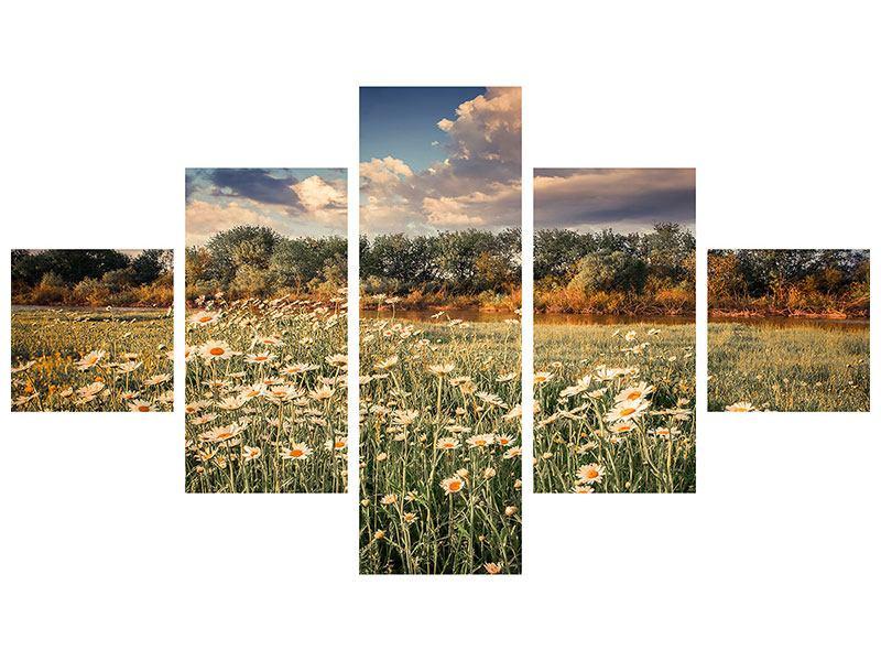 Leinwandbild 5-teilig Die Wiesenmargerite am Fluss