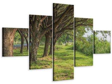 Leinwandbild 5-teilig Alter Baumbestand