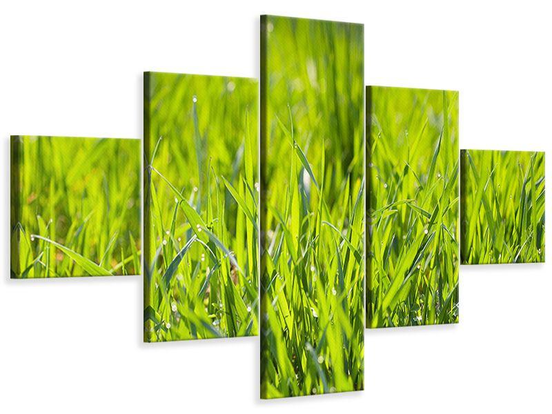 Leinwandbild 5-teilig Gras im Morgentau