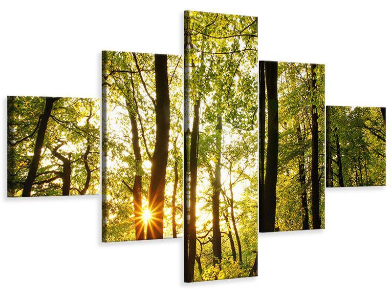 Leinwandbild 5-teilig Sonnenuntergang zwischen den Bäumen