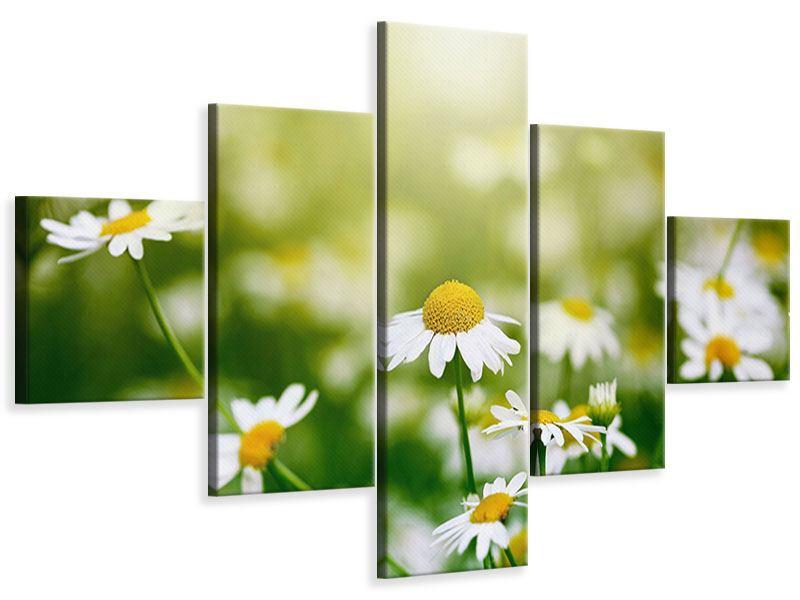Leinwandbild 5-teilig Die Gänseblümchen