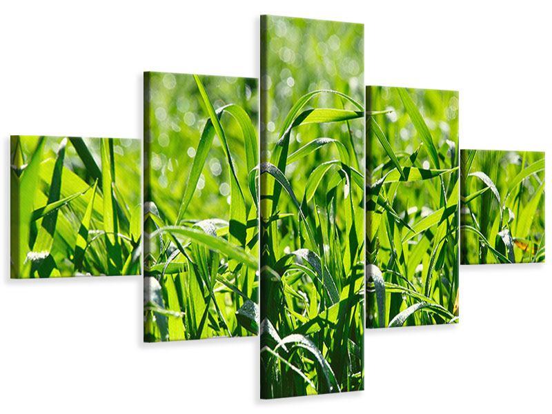 Leinwandbild 5-teilig Sonniges Gras