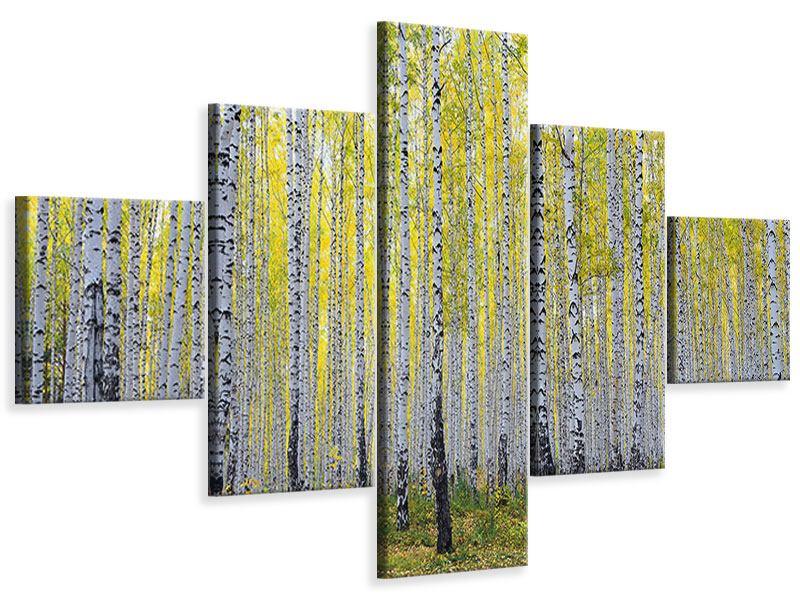 Leinwandbild 5-teilig Herbstlicher Birkenwald