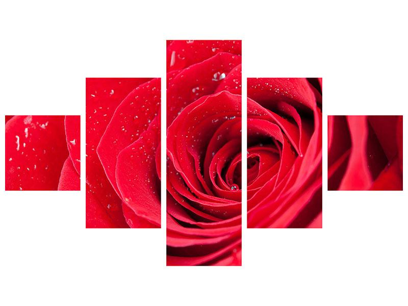 Leinwandbild 5-teilig Rote Rose im Morgentau