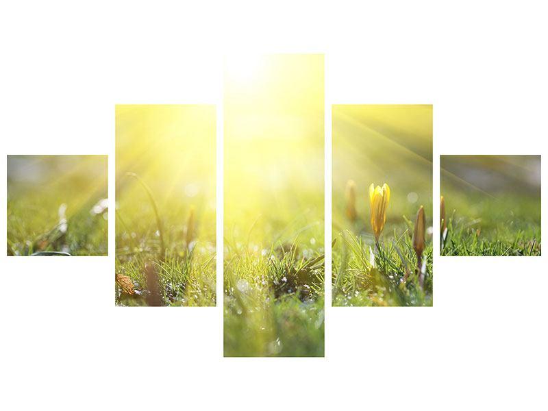 Leinwandbild 5-teilig Blumige Wiese