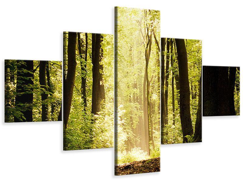 Leinwandbild 5-teilig Sonnenaufgang im Wald