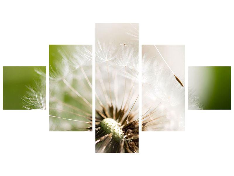Leinwandbild 5-teilig Pusteblume Löwenzahn