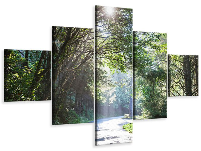 Leinwandbild 5-teilig Sonniger Waldweg