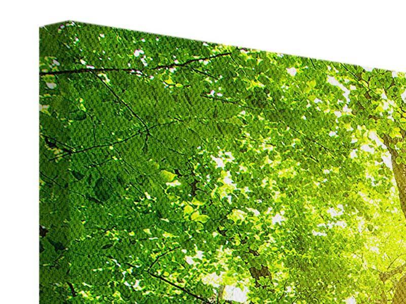 Leinwandbild 5-teilig Baum