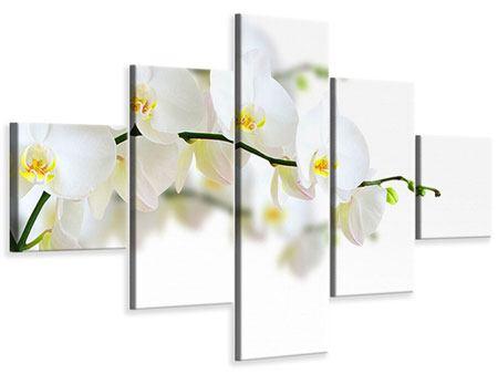 Leinwandbild 5-teilig Weisse Orchideen