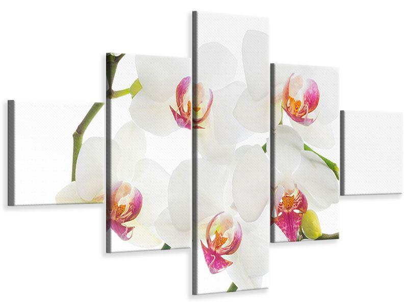 Leinwandbild 5-teilig Orchideenliebe