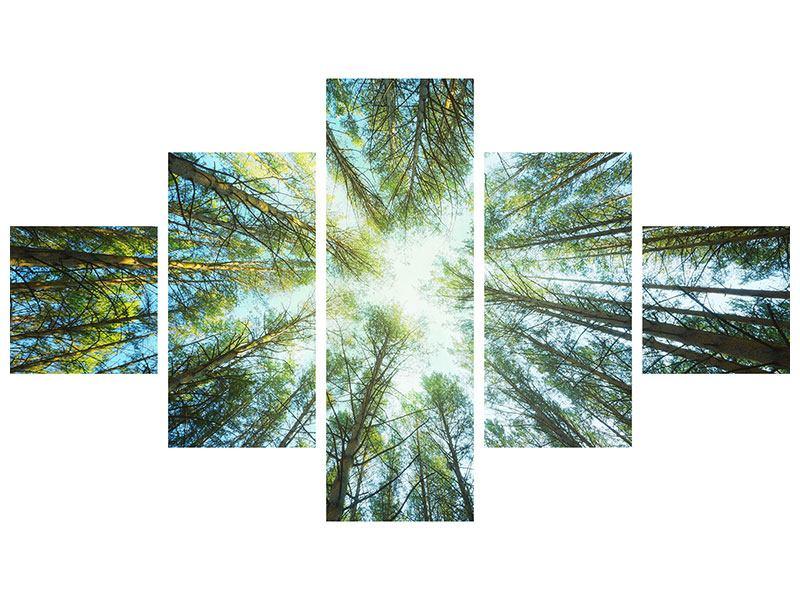 Leinwandbild 5-teilig Kiefernwald