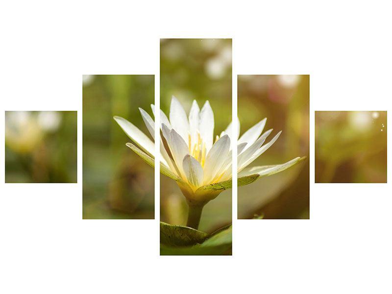 Leinwandbild 5-teilig Lilien-Lichtspiel