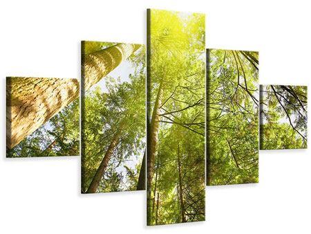 Leinwandbild 5-teilig Baumkronen in der Sonne