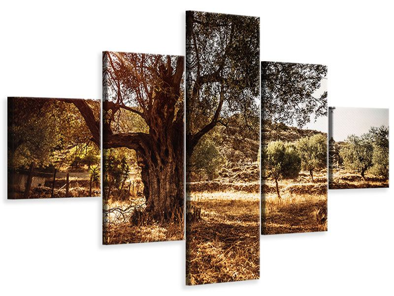 Leinwandbild 5-teilig Olivenhain