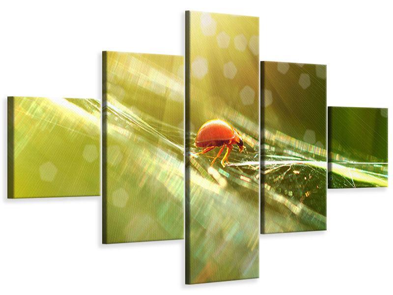 Leinwandbild 5-teilig Marienkäfer im Sonnenlicht