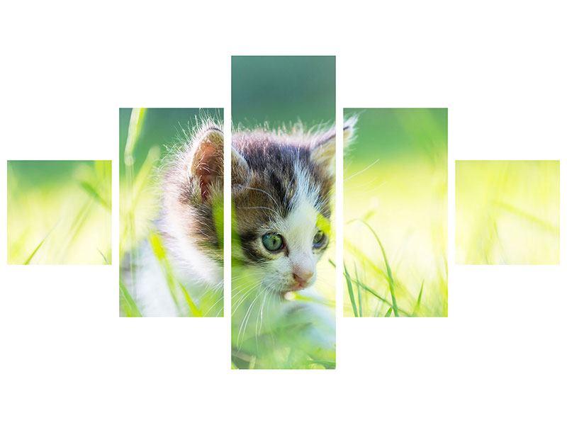 Leinwandbild 5-teilig Kitten