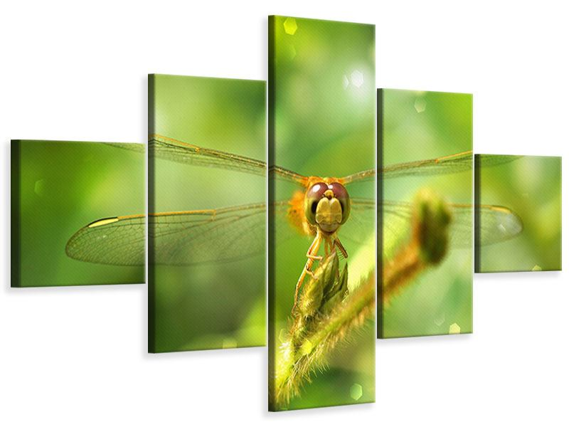 Leinwandbild 5-teilig XXL-Libelle