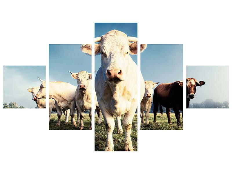 Leinwandbild 5-teilig Kühe