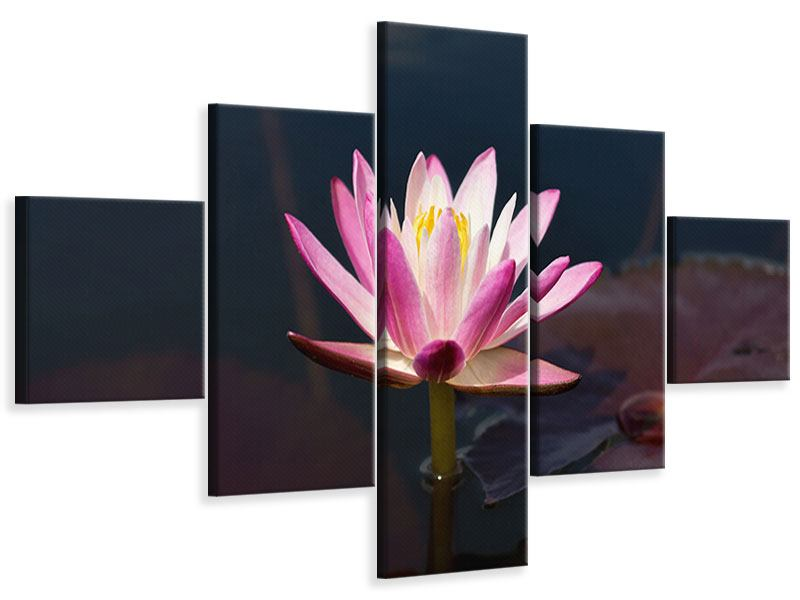 Leinwandbild 5-teilig Seerose in der Abenddämmerung