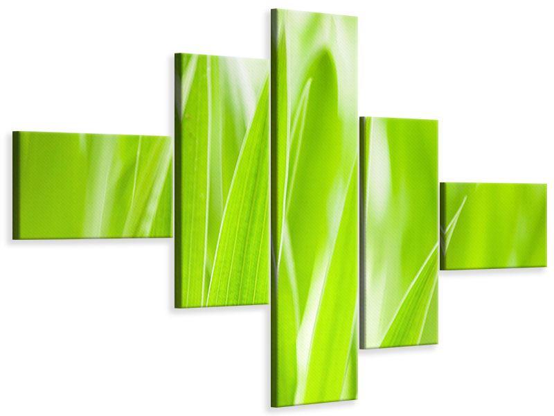 Leinwandbild 5-teilig modern Gras XXL
