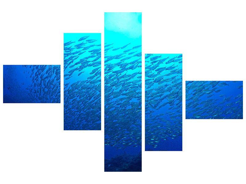 Leinwandbild 5-teilig modern Fischwelt