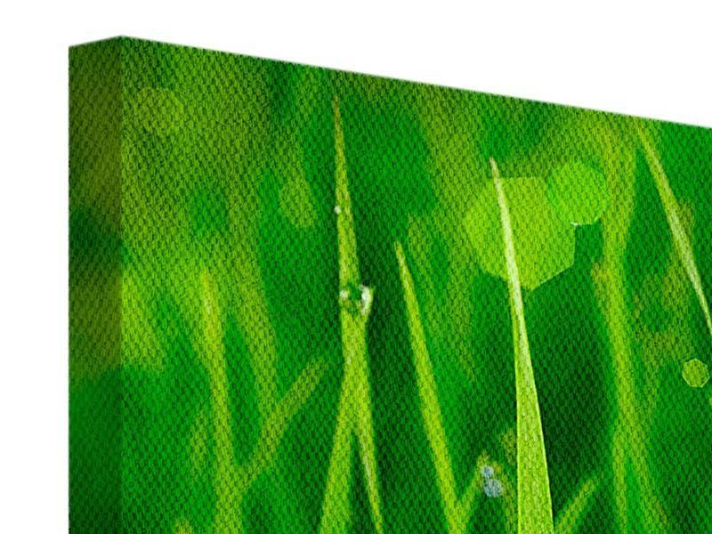 Leinwandbild 5-teilig modern Gras mit Morgentau