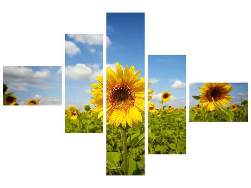 Leinwandbild 5-teilig modern Sommer-Sonnenblumen