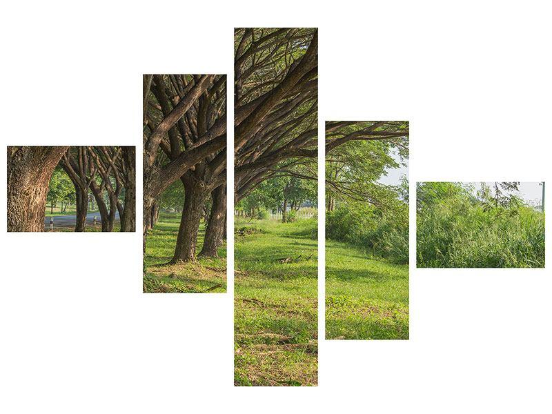 Leinwandbild 5-teilig modern Alter Baumbestand