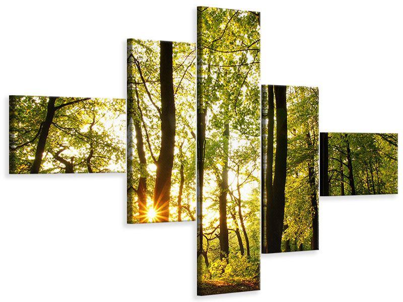 Leinwandbild 5-teilig modern Sonnenuntergang zwischen den Bäumen