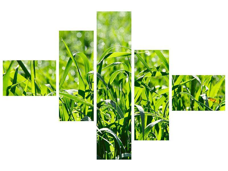 Leinwandbild 5-teilig modern Sonniges Gras